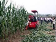 山东常林:穗茎兼收式玉米机初试牛刀