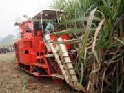 广西糖料蔗收获机械现场演示会在崇左召开