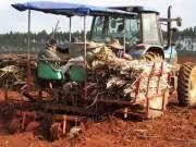 广东东方红农场召开甘蔗机械化种植现场会