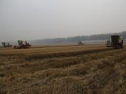 雷沃谷神改变中国农业机械化程度的同时衍生出更多风景