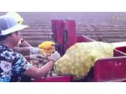 璞盛马铃薯播种机现场视频