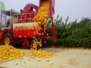 雷沃谷神为玉米机收提供丰富解决方案