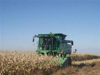 玉米收割机秋收大显身手   美国凯斯6130一台,价格为206万元