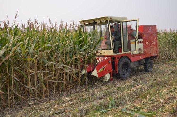 河北冀新玉米收割机