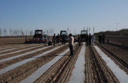 农三师/3月17日,在新疆设兵团农三师四十五团的田间地头,到处呈现着...