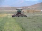 爱科的牧草割晒机