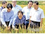 袁隆平:争取提前实现超级稻每公顷产量16吨