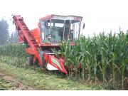 农哈哈4YB-4小麦机底盘互换割台型玉米收割机