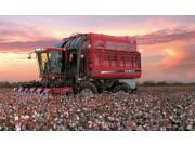 Cotton Express 620采棉机