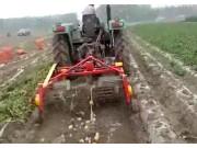 璞盛4UX-130马铃薯收获机收获现场