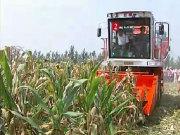山东巨明玉米收产品作业视频