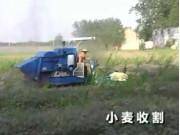 柳林小麦收割机作业视频