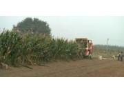 中农博远4YZ-3自走式玉米收获机作业视频