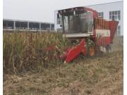 豪丰4YZ-4型自走式玉米收获机作业视频