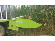 花溪4YZB-3三行玉米收割机作业视频