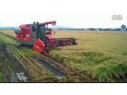 久保田SRH1400全喂入水稻收割机作业视频