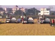 广东科利亚4LZ系列全喂入联合收割机作业视频