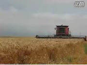 凯斯2388收割机山地作业视频