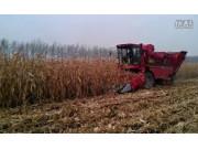 新疆牧神4YZB-5自走式玉米收获机工作视频