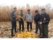 常林农装公司领导走访市场增加市场正能量