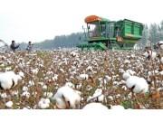 河南省农机推广站开展棉花机收现场演示会
