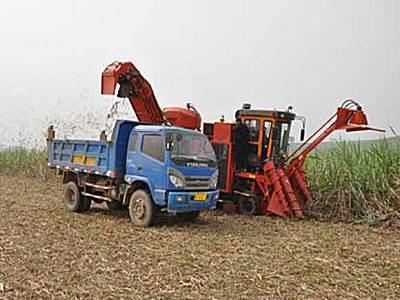 广西云马泰缘在宁明华侨农场举办甘蔗收获机演示会