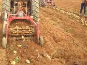 青岛洪珠农机公司广西南宁举办马铃薯机械化现场会