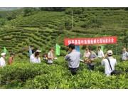 饶平县召开茶叶生产机械化现场演示会
