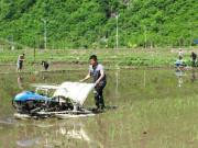 安图县举办水稻机插现场会