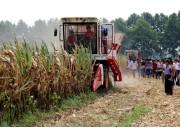 安徽固镇县召开2013年玉米机械化收获作业演示会