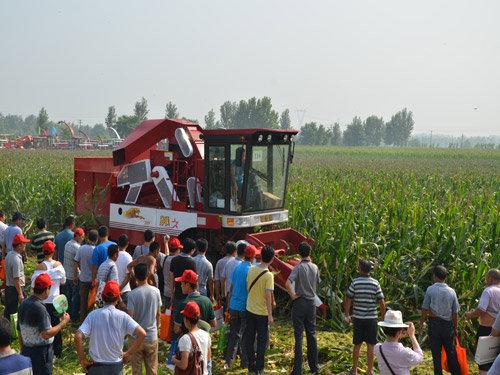 勇猛4YZ-3型玉米收獲機收割倒伏玉米