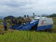 廣西柳州舉辦千畝水稻生產全程機械化示范區機收現場會