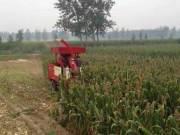 河北冀新牌青贮机、玉米收割机视频