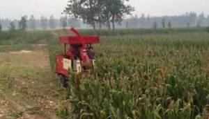 河北冀新牌青貯機、玉米收割機視頻