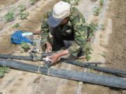 农三师/农三师四十五团加大节水滴灌农业技术