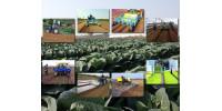 成帆农业装备