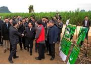 研发融资齐跟上 约翰迪尔助推甘蔗生产机械化
