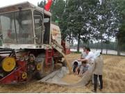 雷沃爱心机收队免费为贫困农户收麦