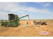 福海:土地整合示范田小麦收割现场观摩会