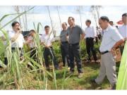 湛江垦区甘蔗和橡胶风害复产工作现场会在南华召开