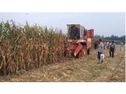 雷沃谷神两款玉米机获用户青睐