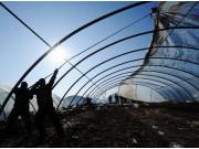 农业社会化服务组织遭遇发展之困