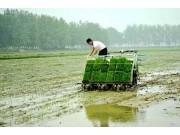 湖北老河口市运用北斗自动导航农机插秧
