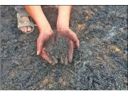 山東河南等多地發生麥田著火事件 上千畝未收小麥遭殃