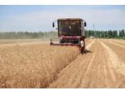 天津市举办小麦机收启动仪式暨秸秆综合利用技术现场会