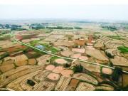 全国麦收过八成 夏粮丰收成定局