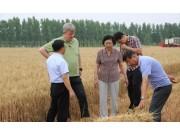 """克拉斯技术导入 金亿""""春雨""""小麦收割机实现秸秆打捆"""