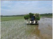 安徽池州貴池區舉辦水稻缽育秧苗機插技術現場會