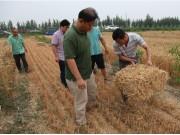 小麦籽粒收获及秸秆打捆一体化技术在津试验成功