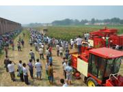 河北冀新穗莖兼收玉米收獲機現場演示會在邢臺舉行